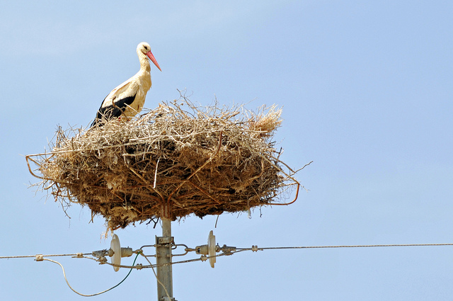 Fun Fact About Storks in Armenia