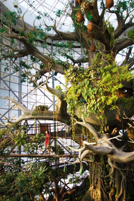 Green Planet By Meraas- Dubai's Secret Rainforest