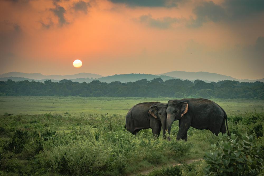 Sunset at Yala National Park, Sri Lanka